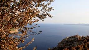 Αδριατική παραλία με την ελιά στην Κροατία αφηρημένη όψη τοπίων ματιών πουλιών Στοκ Φωτογραφία