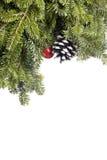αειθαλές απομονωμένο λευκό διακοσμήσεων Χριστουγέννων Στοκ Εικόνες