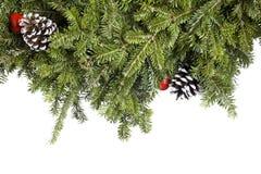 αειθαλές απομονωμένο λευκό διακοσμήσεων Χριστουγέννων Στοκ Φωτογραφίες