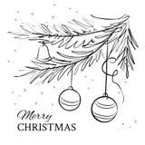 Αειθαλές κομψό δέντρο Χριστουγέννων Στοκ Φωτογραφίες