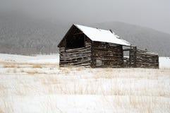 αειθαλής αγροτικός σιτ&a Στοκ Φωτογραφίες