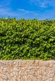Αειθαλής κισσός, τοίχος πετρών και μπλε ηλιόλουστος ουρανός, υπόβαθρο κήπων στοκ εικόνες