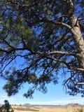Αειθαλής πέρα από το υπόβαθρο Mesa Στοκ φωτογραφίες με δικαίωμα ελεύθερης χρήσης