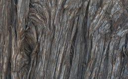 Αειθαλής στενός επάνω δέντρων στη λίμνη του Μπιλ Evans στοκ εικόνα με δικαίωμα ελεύθερης χρήσης