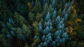 Αειθαλή δέντρα στο πολιτεία της Washington στοκ εικόνες