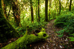 Αειθαλές δάσος Hill στοκ εικόνες με δικαίωμα ελεύθερης χρήσης