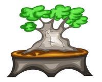 αειθαλές μικροσκοπικό δέντρο πεύκων μπονσάι ελεύθερη απεικόνιση δικαιώματος
