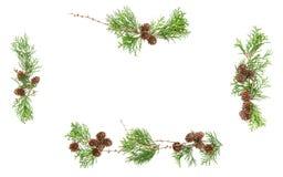 Αειθαλές Floral πλαίσιο υποβάθρου Χριστουγέννων κώνων κλάδων Στοκ Εικόνες