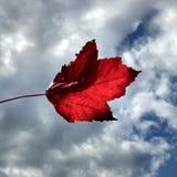 Αεράκι 2 φθινοπώρου Στοκ φωτογραφίες με δικαίωμα ελεύθερης χρήσης