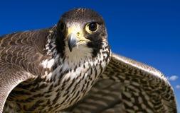 αερομεταφερόμενο κυνήγ στοκ φωτογραφίες με δικαίωμα ελεύθερης χρήσης