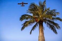 Αεροπλάνο μηχανών στο μπλε ουρανό και το φοίνικα Στοκ Φωτογραφία