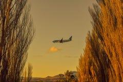 Αεροπλάνο που πετά μεταξύ δύο σειρών των δέντρων στοκ εικόνες με δικαίωμα ελεύθερης χρήσης