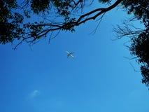Αεροπλάνο που πετά σε έναν σαφή μπλε ουρανό στοκ εικόνες