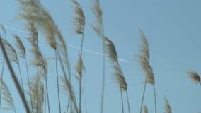 Αεροπλάνο που πηγαίνει σε όλο τον κάλαμο την ηλιόλουστη ημέρα φιλμ μικρού μήκους