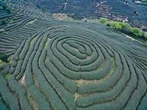 Αεροφωτογραφία πάνω από το τοπίο κήπων τσαγιού βουνών στοκ εικόνα με δικαίωμα ελεύθερης χρήσης