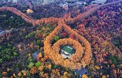 Αεροφωτογραφία - χρώματα φθινοπώρου Στοκ Εικόνες