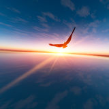 Αετός ενάντια στον ήλιο οριζόντων Στοκ Φωτογραφία