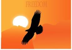 Αετός ελευθερίας Στοκ εικόνα με δικαίωμα ελεύθερης χρήσης
