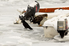 Αετός και κοράκι Στοκ εικόνα με δικαίωμα ελεύθερης χρήσης