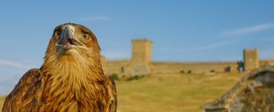 Αετός μπροστά από το κάστρο Στοκ Εικόνες