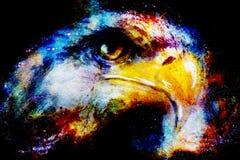 Αετός στο αφηρημένο υπόβαθρο χρώματος Σχεδιάγραμμα portratit Στοκ εικόνες με δικαίωμα ελεύθερης χρήσης
