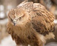 Αετός στο πάρκο υπαίθρια Στοκ Φωτογραφίες