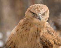 Αετός στο πάρκο υπαίθρια Στοκ εικόνα με δικαίωμα ελεύθερης χρήσης
