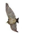 αετός φορτίου Στοκ εικόνες με δικαίωμα ελεύθερης χρήσης