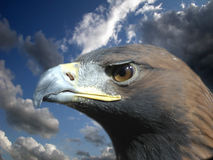 αετός χρυσός Στοκ εικόνα με δικαίωμα ελεύθερης χρήσης