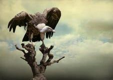 Αετός Στοκ φωτογραφίες με δικαίωμα ελεύθερης χρήσης
