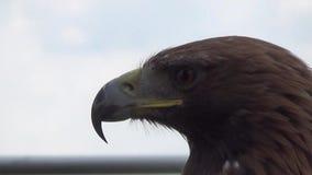 Αετός φιλμ μικρού μήκους