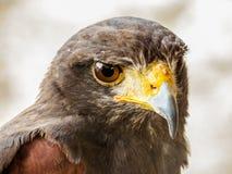 Αετός Trasmoz, Αραγονία Ισπανία Στοκ Εικόνες