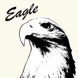 Αετών χέρι που σύρεται επικεφαλής Απομονωμένο σκίτσο υπόβαθρο αετών Τυποποιημένος μαλλιαρός αετός επιγραφής Στοκ Φωτογραφία