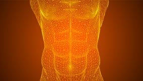 Αθλητικός αρσενικός κορμός Υγιές σώμα ελεύθερη απεικόνιση δικαιώματος