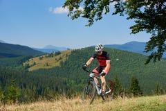 Αθλητικός αθλητικός τύπος sportswear που ανακυκλώνει ένα ποδήλατο στην υψηλή χλόη κάτω από το μεγάλο πράσινο κλάδο δέντρων Στοκ Εικόνα