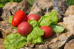 αθλητισμός σιτηρεσίου Λαχανικά και γλυκό νερό Στοκ Εικόνα