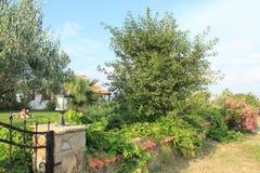 Αιγαία περιοχή - νησί, κήποι και σπίτια Tenedos στοκ φωτογραφία με δικαίωμα ελεύθερης χρήσης
