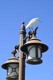 αιγυπτιακή θρεσκιόρνιθ&alpha Στοκ φωτογραφία με δικαίωμα ελεύθερης χρήσης