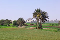 αιγυπτιακό τοπίο Στοκ Εικόνες