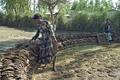 Αιθιοπική γυναίκα που κάνει τους δίσκους καυσίμων από την κοπριά αγελάδων Στοκ φωτογραφία με δικαίωμα ελεύθερης χρήσης