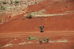 αιθιοπική ζωή αγροτική στοκ εικόνα