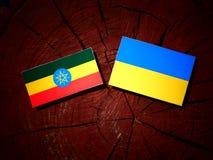 Αιθιοπική σημαία με την ουκρανική σημαία σε ένα κολόβωμα δέντρων που απομονώνεται Στοκ Φωτογραφίες