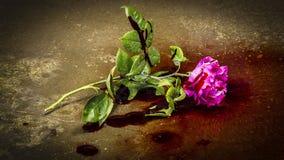 Αιματηρός αυξήθηκε Στοκ Εικόνες