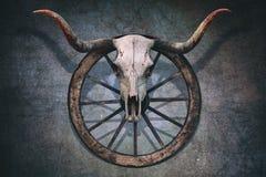 Αιματηρό κρανίο του Bull Στοκ Εικόνες