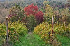 Αιμιλία-Ρωμανία, Ιταλία: τοπίο φθινοπώρου της επαρχίας με Στοκ Εικόνες
