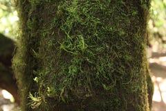 Αισθανθείτε το Λα Gomera στοκ φωτογραφία με δικαίωμα ελεύθερης χρήσης
