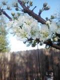 Αισθητικά άσπρα άνθη Στοκ φωτογραφία με δικαίωμα ελεύθερης χρήσης