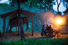 Αιχμάλωτος ελέφαντας στοκ εικόνα