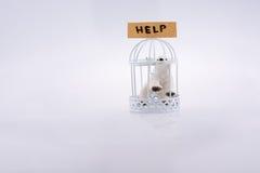 Αιχμάλωτος πολικών αρκουδών σε ένα κλουβί στοκ φωτογραφία με δικαίωμα ελεύθερης χρήσης