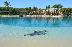 Αιχμάλωτο δελφίνι στο παγκόσμιο Gold Coast Αυστραλία θάλασσας Στοκ Εικόνες
